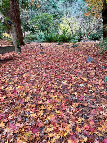 Forest_Floor_To_Canopy_1
