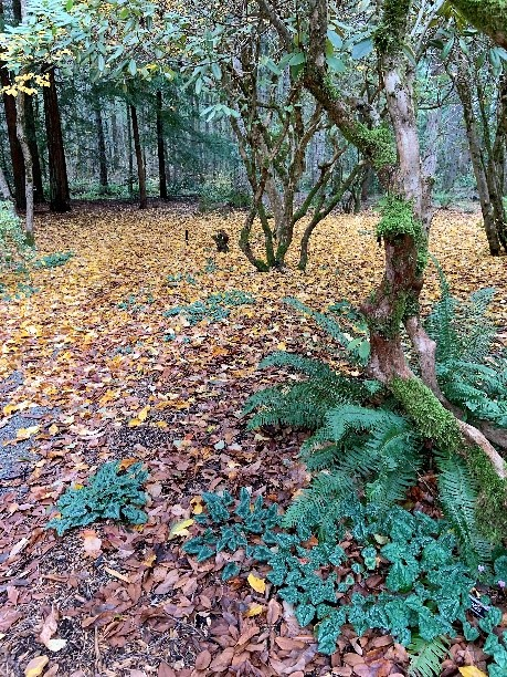 Forest_Floor_To_Canopy_4