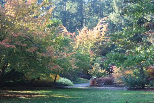 Woodland_Garden_2