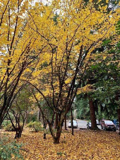 Woodland_Garden_4
